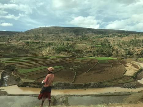 Arrozales entre Antsirabe y Antananarivo